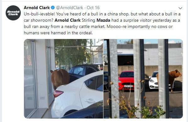 Cow at Mazda