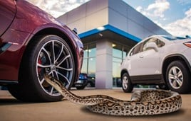 CarGurus' test drives survey found some potential customers had taken bizarre pets along for the ride